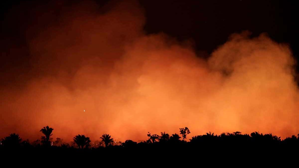 Facts behind the Amazon Rainforest burning and how we all could help to resolve this issue?