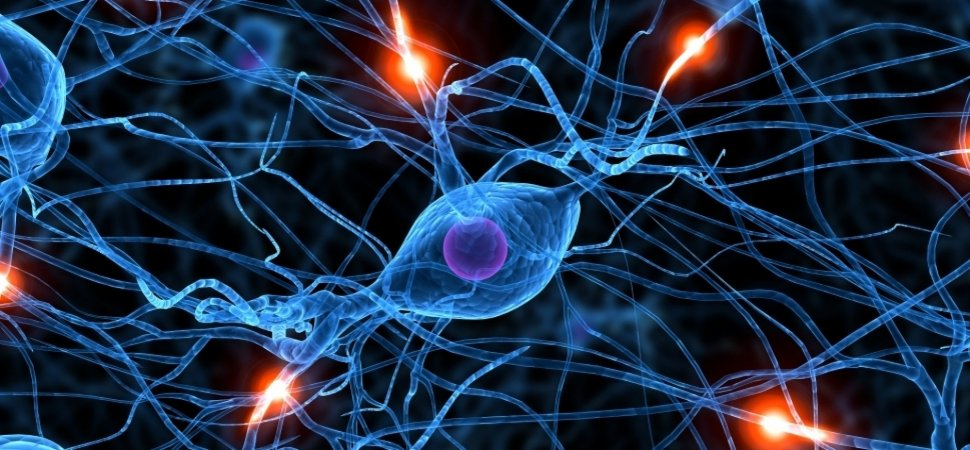 Analyzers Successfully Create Live Neural Networks